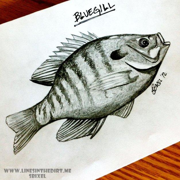 (Hybrid) Bluegill (Maybe)
